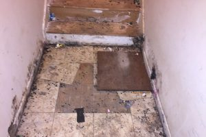 Mold In Basement  Mold Removal Greenville SC  Mold Remediation Greenville SC