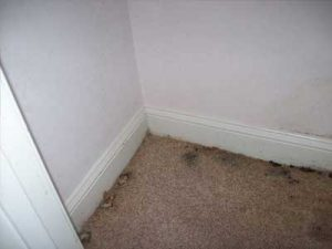 Mold Growth in your home | Greenville SC | Anderson SC| Spartanburg SC| Greer SC