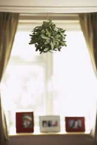 House plants can make your air healthier  Greenville SC Indoor Air Quality Specialists