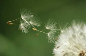Spring Allergy Relief | Carolina Air Care Greenville SC| Spartanburg SC| Anderson SC| Asheville NC| Laurens SC| Upstate SC