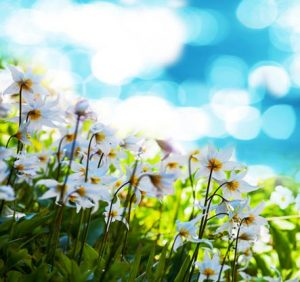 Allergy Relief Upstate South Carolina | Indoor Air Quality Greenville SC, Spartanburg SC